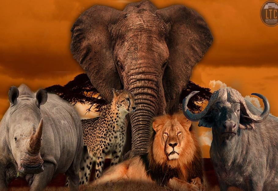 Private 1 Day Cape Town Safari Tour