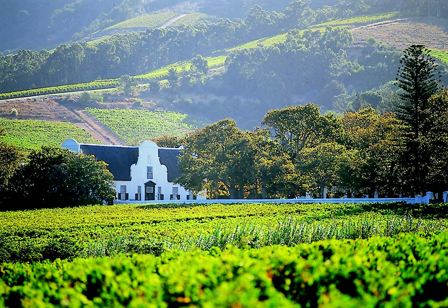 Full Day Private Winelands Tour