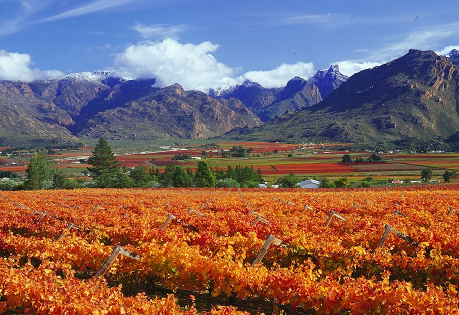 Winelands Experience - Day Tours