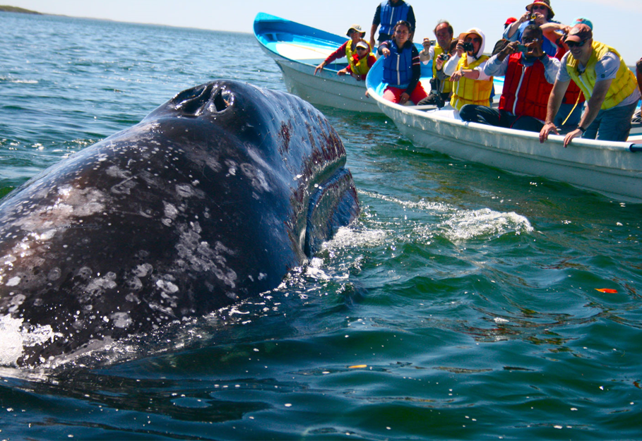 Board-based Whale Watching - Hermanus Day Tour