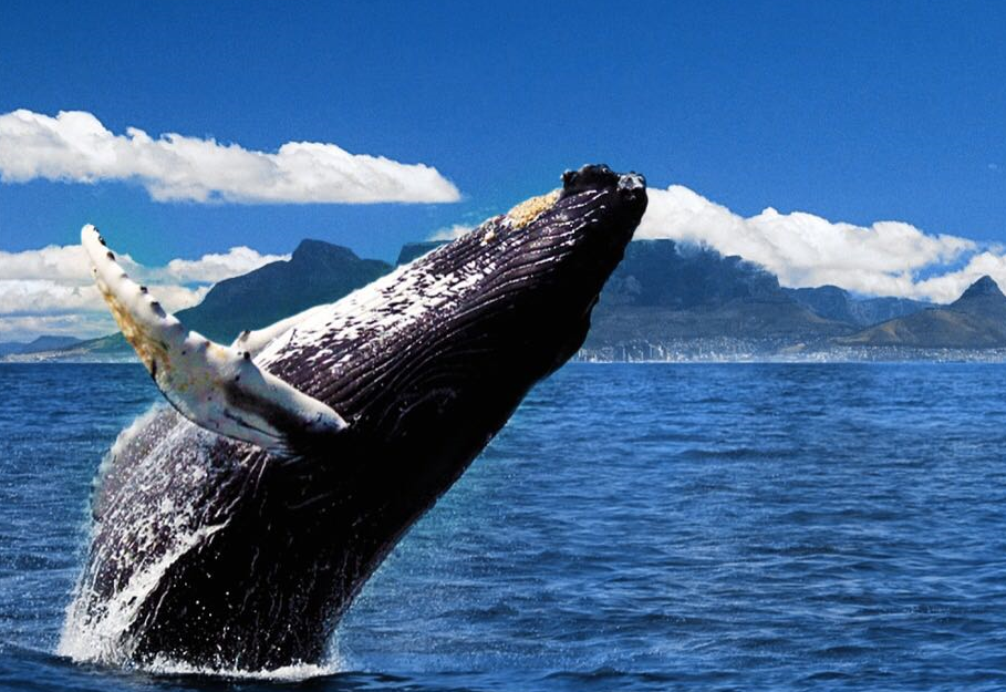 Private Whale Watching Day Tour